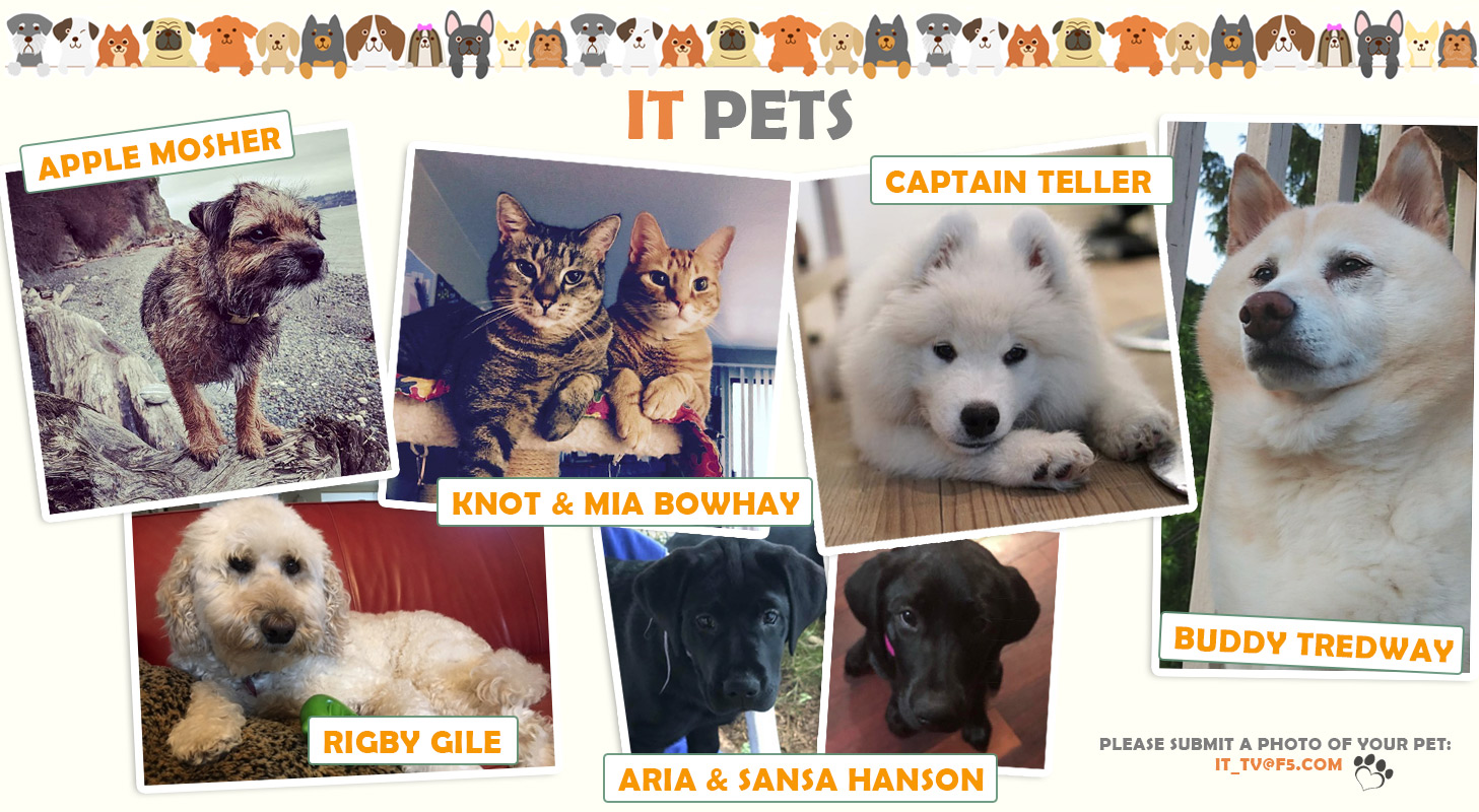 IT Pets. Slide for IT TV.